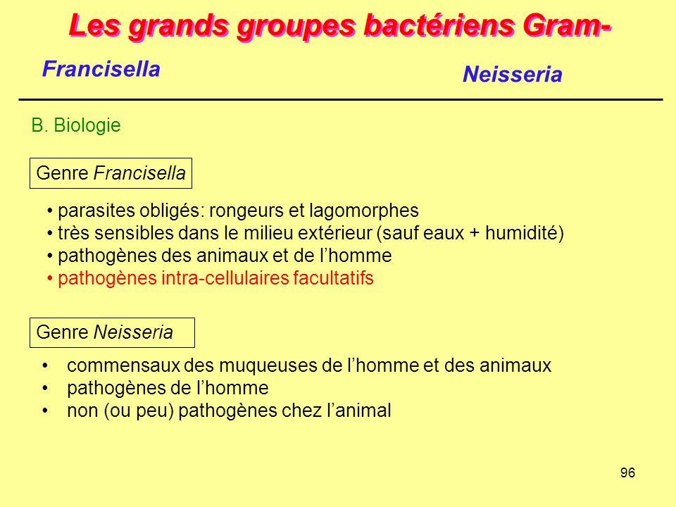 96 Les grands groupes bactériens Gram- B. Biologie Neisseria Francisella parasites obligés: rongeurs et lagomorphes très sensibles dans le milieu exté