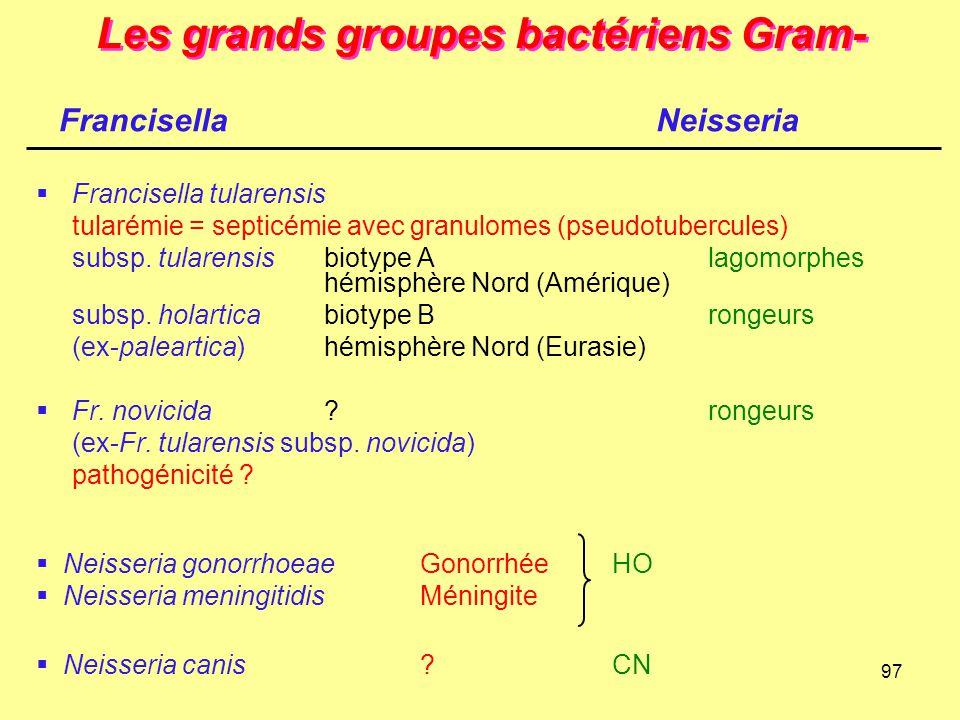 97 Les grands groupes bactériens Gram-  Francisella tularensis tularémie = septicémie avec granulomes (pseudotubercules) subsp. tularensisbiotype Ala