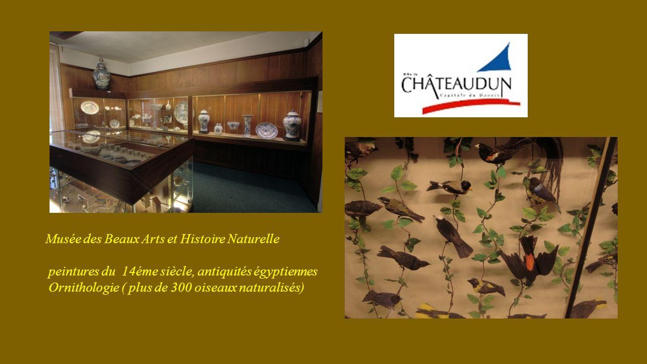 Musée des Beaux Arts et Histoire Naturelle peintures du 14éme siècle, antiquités égyptiennes Ornithologie ( plus de 300 oiseaux naturalisés)