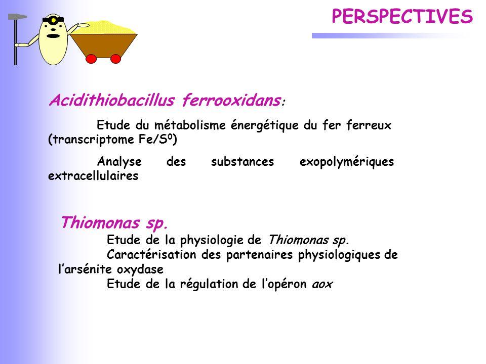 PERSPECTIVES Acidithiobacillus ferrooxidans : Etude du métabolisme énergétique du fer ferreux (transcriptome Fe/S 0 ) Analyse des substances exopolymé
