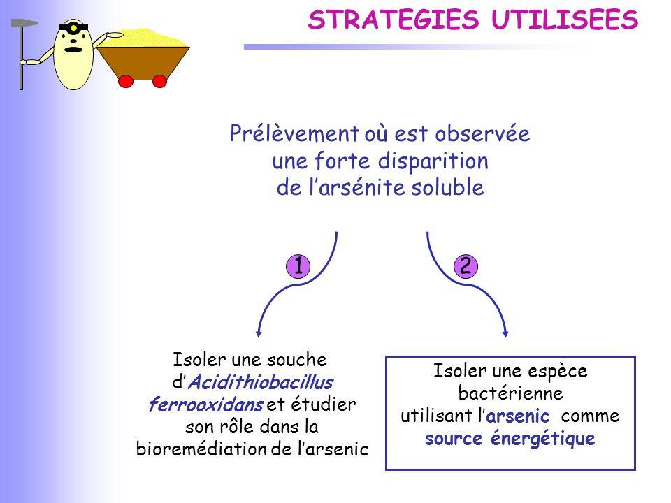 CONCLUSIONS Bioremédiation de l 'arsenic par précipitation (A.