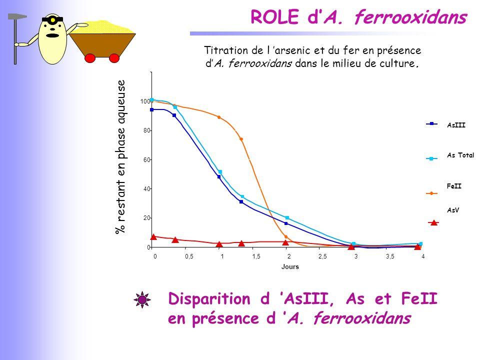 ROLE d'A. ferrooxidans % restant en phase aqueuse Titration de l 'arsenic et du fer en présence d'A. ferrooxidans dans le milieu de culture. 0 20 40 6