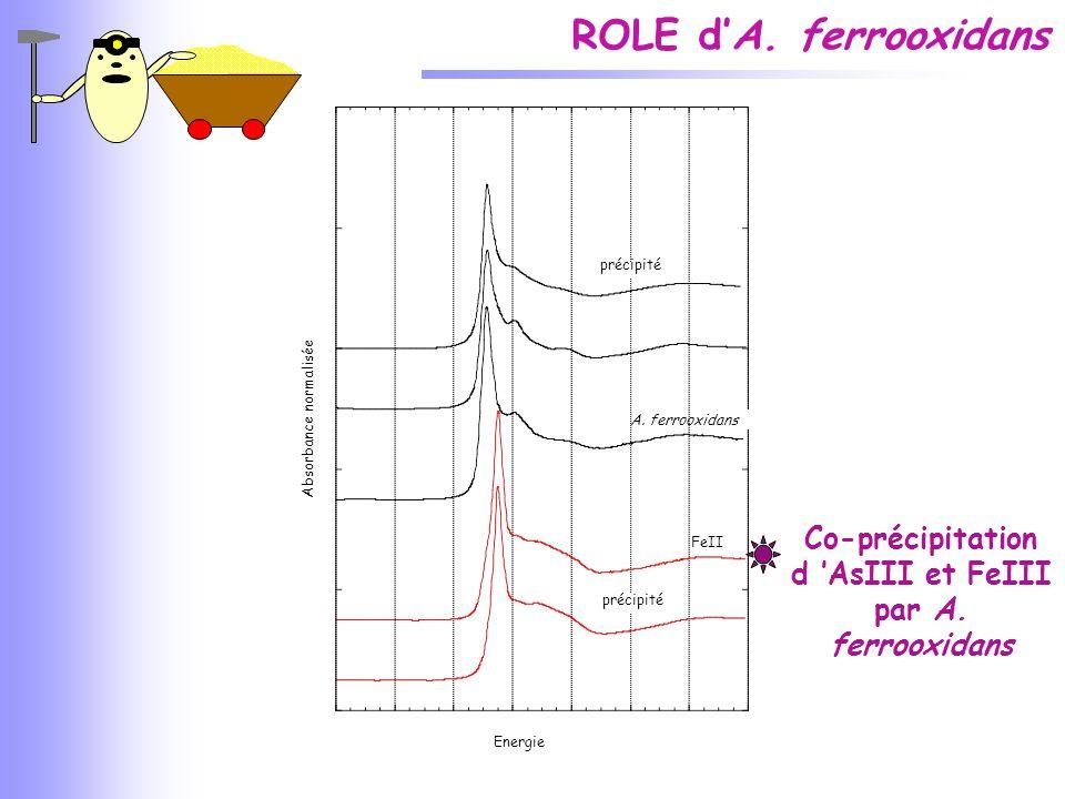 ROLE d'A. ferrooxidans Energie Co-précipitation d 'AsIII et FeIII par A. ferrooxidans CC1 précipité A. ferrooxidans FeII précipité Absorbance normalis