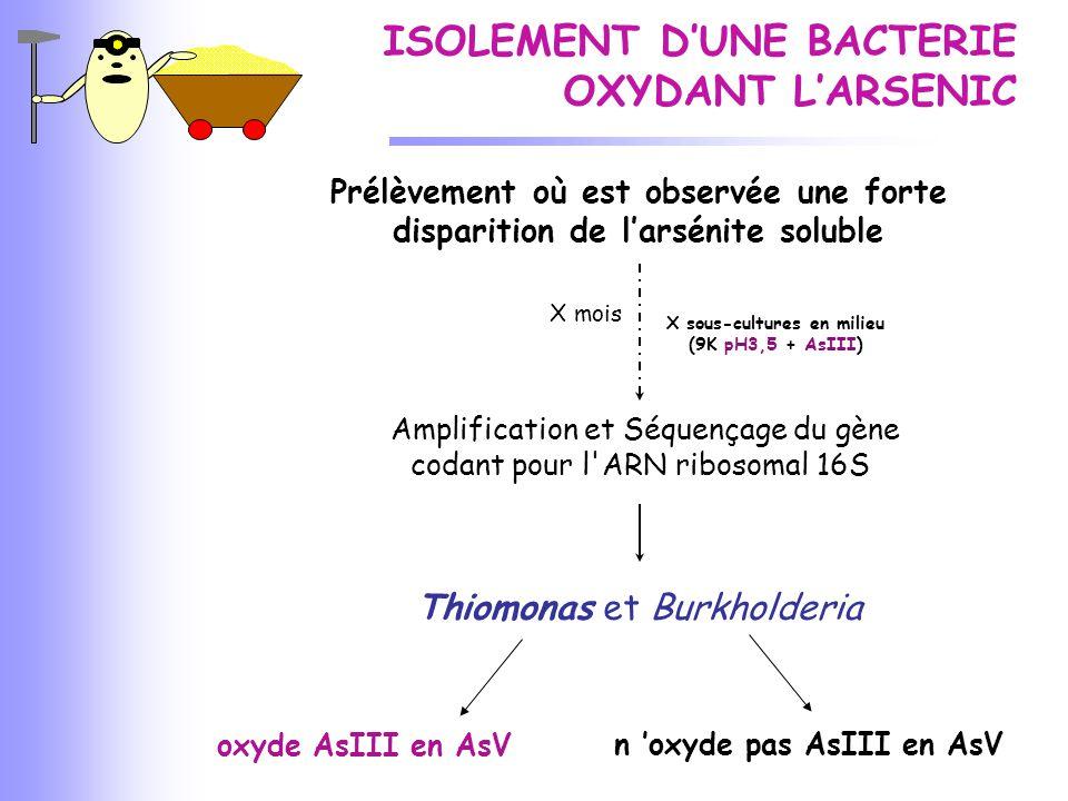 Dosages arsénite, arséniate, arsenic total dans le surnageant de culture en milieu (9K pH3,5 + AsIII) de Thiomonas DOSAGES ARSENIC 0,51,01,52,02,53,0 Nombre de jours 0 20 40 60 80 100 0,0 % restant dans la phase aqueuse As total [As total] ne varie pas AsIII Disparition de l'AsIII AsV Apparition de l'AsV Oxydation de l 'AsIII en AsV par Thiomonas