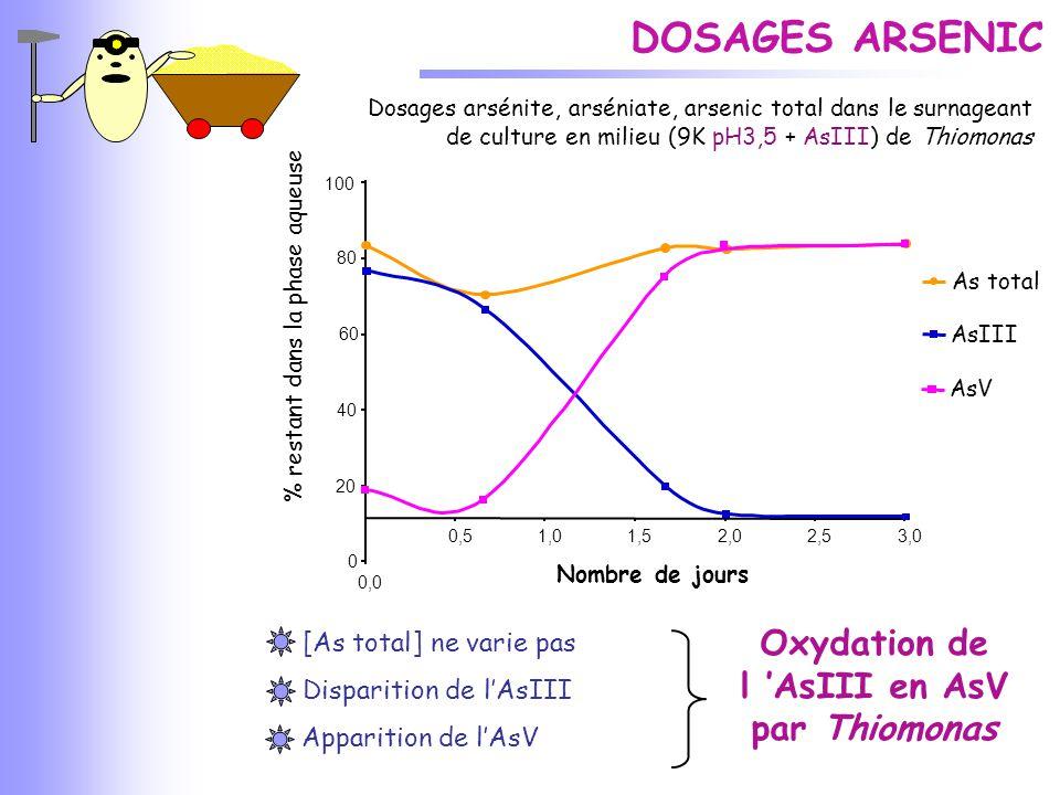 Dosages arsénite, arséniate, arsenic total dans le surnageant de culture en milieu (9K pH3,5 + AsIII) de Thiomonas DOSAGES ARSENIC 0,51,01,52,02,53,0
