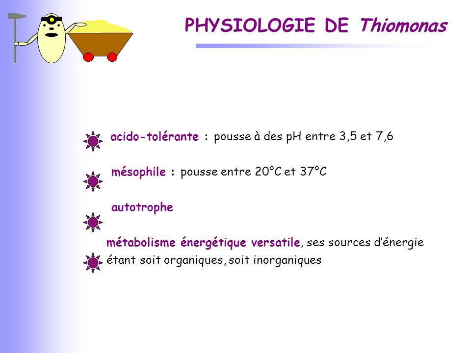 PHYSIOLOGIE DE Thiomonas acido-tolérante : pousse à des pH entre 3,5 et 7,6 mésophile : pousse entre 20°C et 37°C autotrophe métabolisme énergétique v