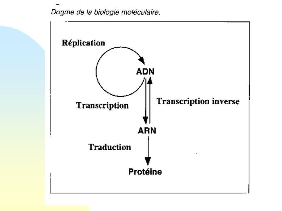 Le métabolisme intermédiaire n Introduction. n Le métabolisme intermédiaire