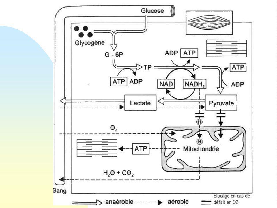 Structure général des lipoprotéines plasmatiques