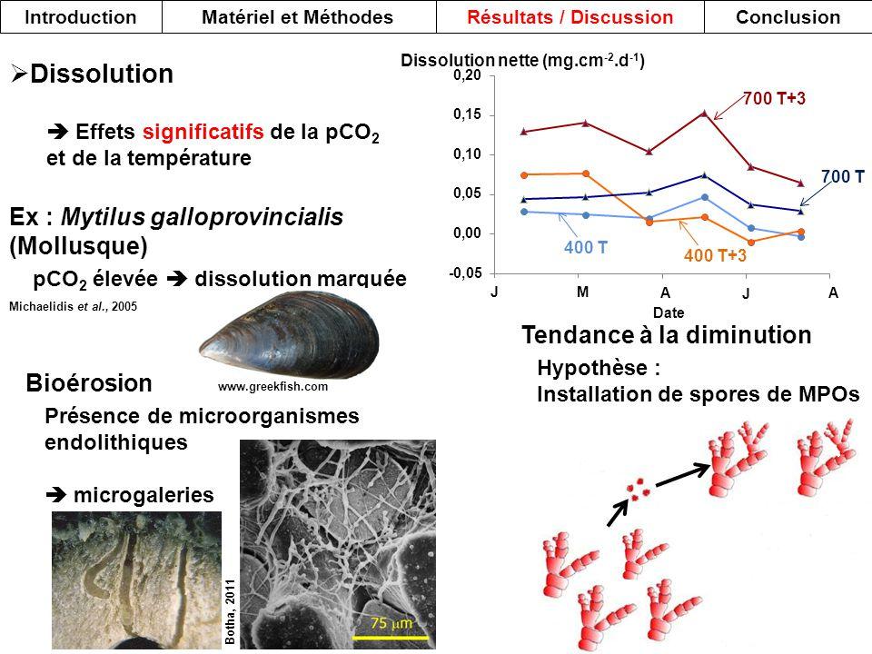 Dissolution nette (mg.cm -2.d -1 ) Date 700 T+3 700 T 400 T 400 T+3 JM A J A IntroductionMatériel et MéthodesRésultats / DiscussionConclusion  Dissol