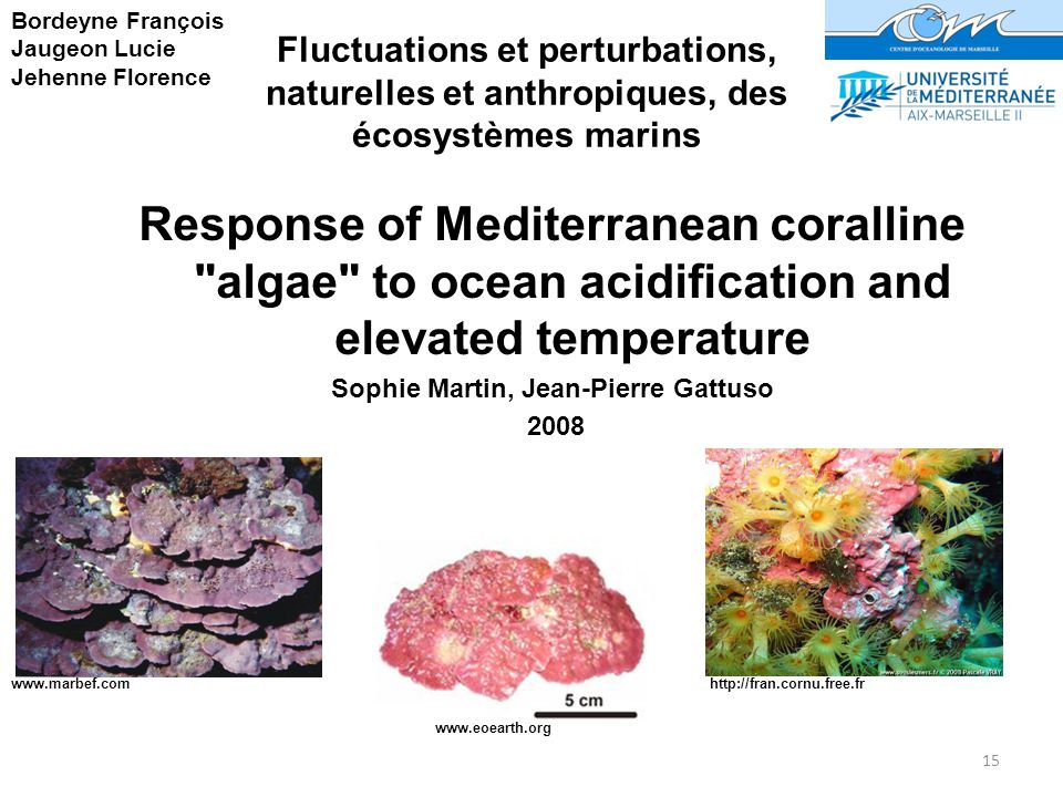 15 Fluctuations et perturbations, naturelles et anthropiques, des écosystèmes marins Bordeyne François Jaugeon Lucie Jehenne Florence www.marbef.com http://fran.cornu.free.fr www.eoearth.org Response of Mediterranean coralline algae to ocean acidification and elevated temperature Sophie Martin, Jean-Pierre Gattuso 2008
