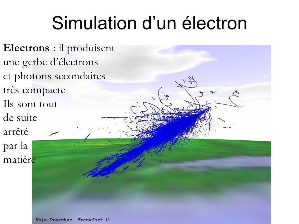 Simulation d'un électron Electrons : il produisent une gerbe d'électrons et photons secondaires très compacte Ils sont tout de suite arrêté par la mat