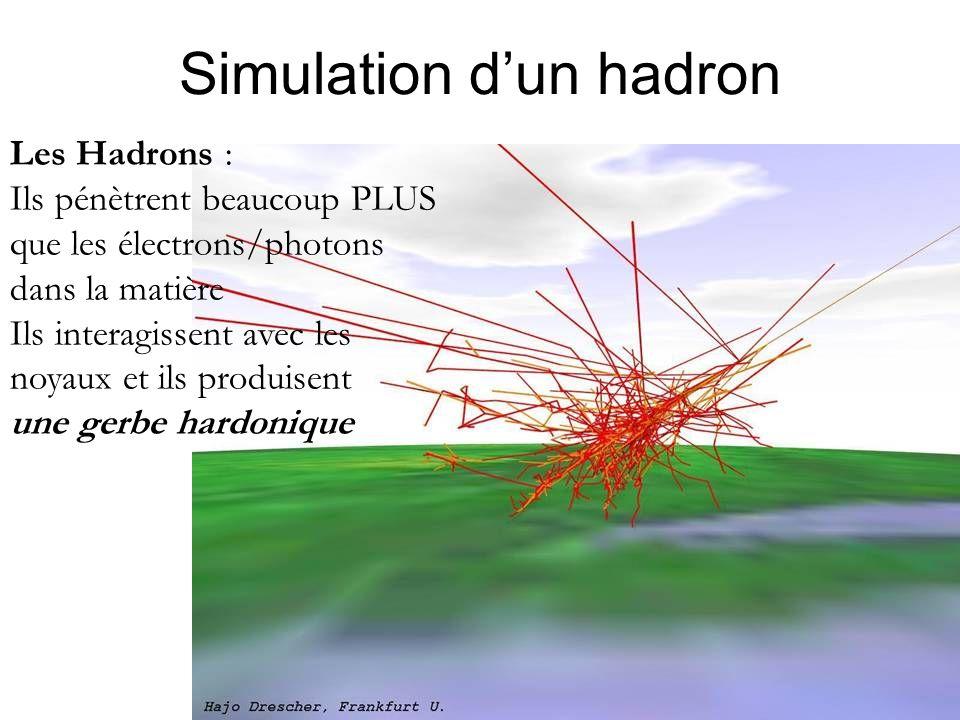 Simulation d'un hadron Les Hadrons : Ils pénètrent beaucoup PLUS que les électrons/photons dans la matière Ils interagissent avec les noyaux et ils produisent une gerbe hardonique