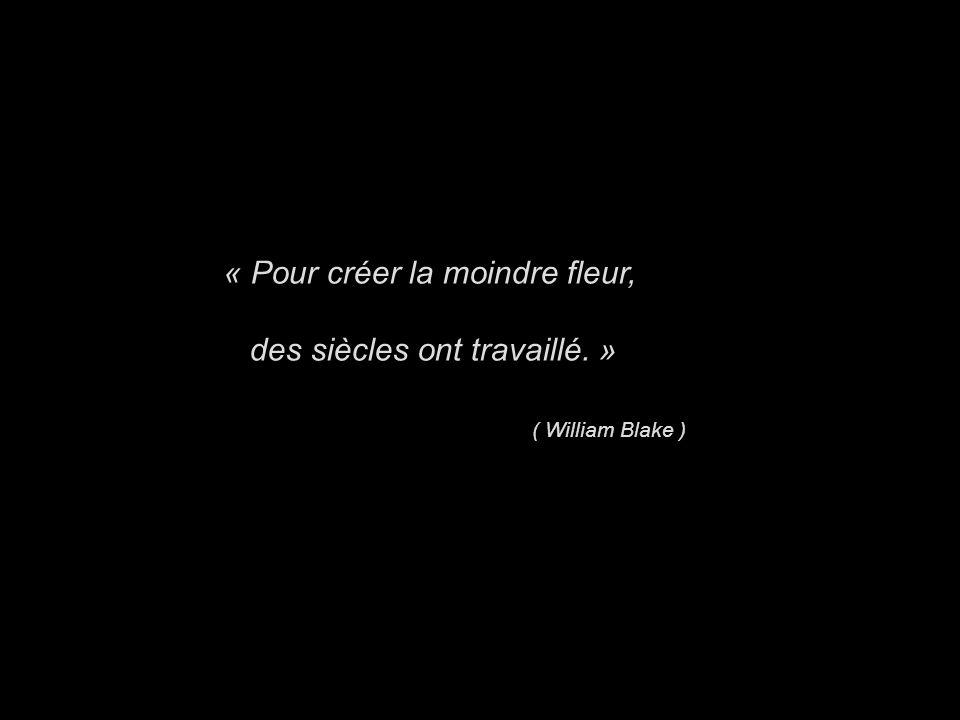 « Pour créer la moindre fleur, des siècles ont travaillé. » ( William Blake )