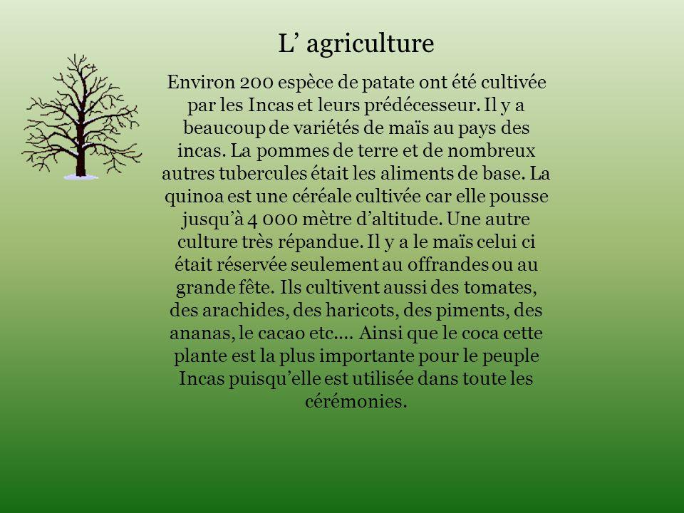 L' agriculture Environ 200 espèce de patate ont été cultivée par les Incas et leurs prédécesseur. Il y a beaucoup de variétés de maïs au pays des inca