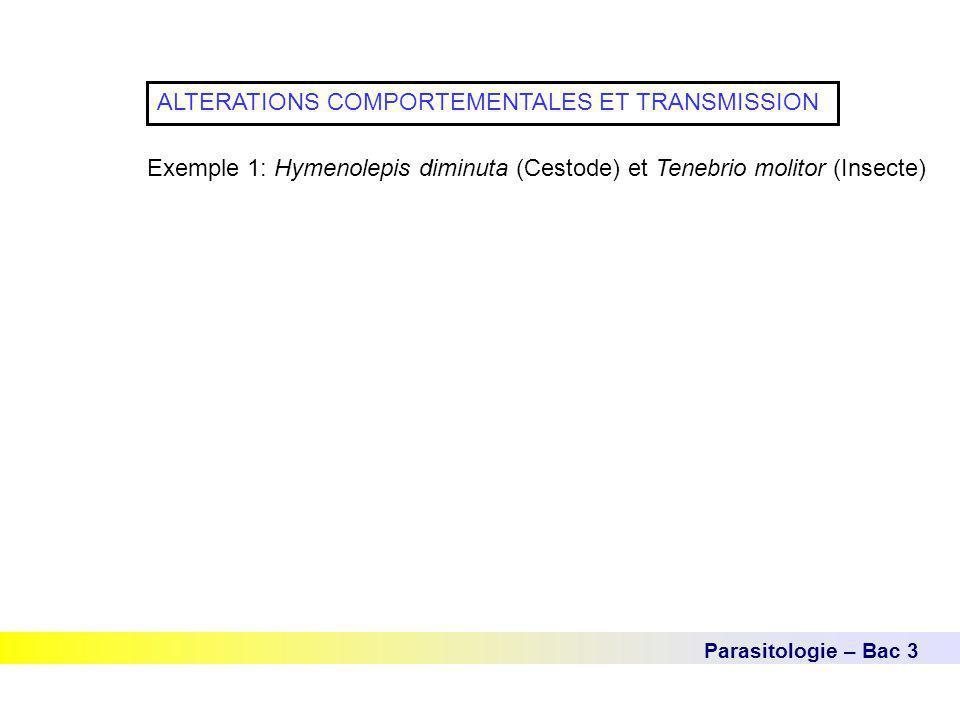 Parasitologie – Bac 3 ALTERATIONS COMPORTEMENTALES ET TRANSMISSION Exemple 1: Hymenolepis diminuta (Cestode) et Tenebrio molitor (Insecte)