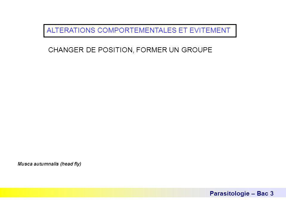 Parasitologie – Bac 3 ALTERATIONS COMPORTEMENTALES ET EVITEMENT CHANGER DE POSITION, FORMER UN GROUPE Musca autumnalis (head fly)