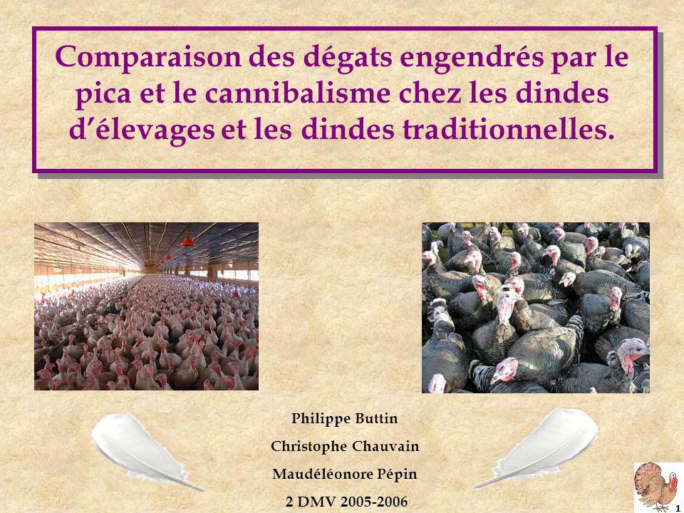 Comparaison des dégats engendrés par le pica et le cannibalisme chez les dindes d'élevages et les dindes traditionnelles.