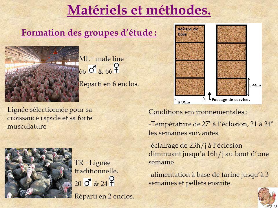 Matériels et méthodes. Formation des groupes d'étude : ML= male line 66 & 66 Réparti en 6 enclos.
