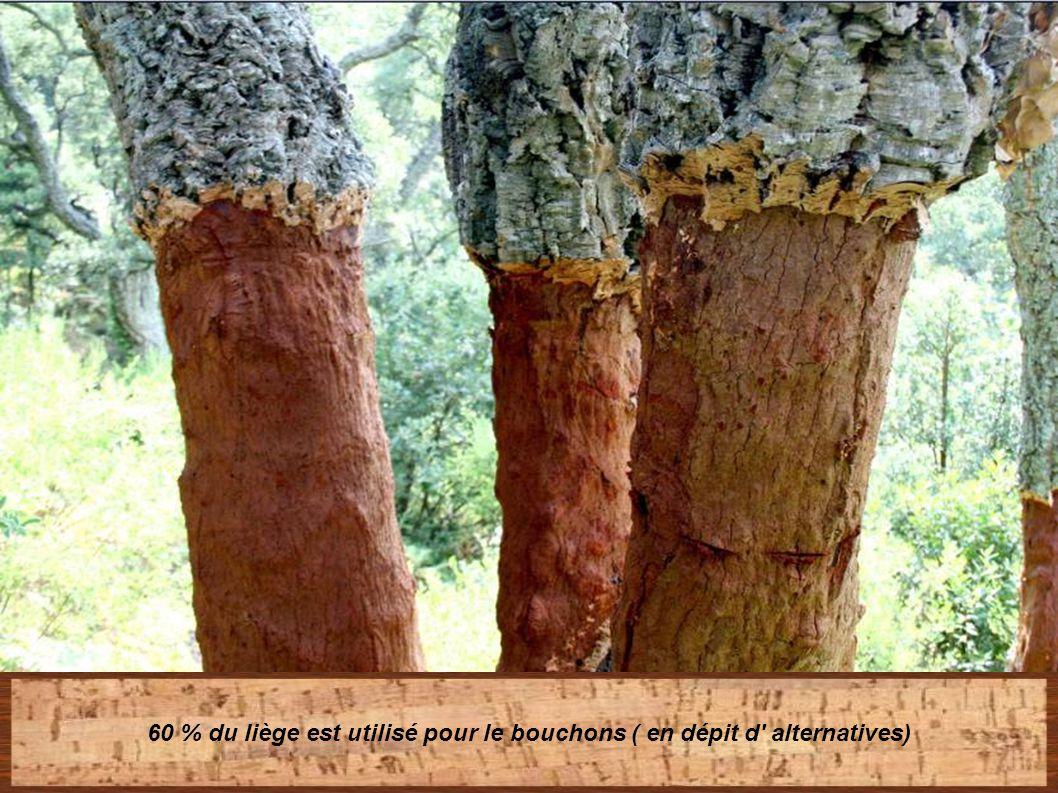 Le liège est facilement recyclable et aide à maintenir un éco-système, empêchant un environnement local aride