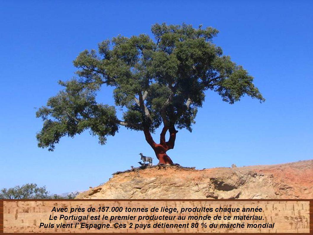 Avec près de 157.000 tonnes de liège, produites chaque année Le Portugal est le premier producteur au monde de ce matériau.