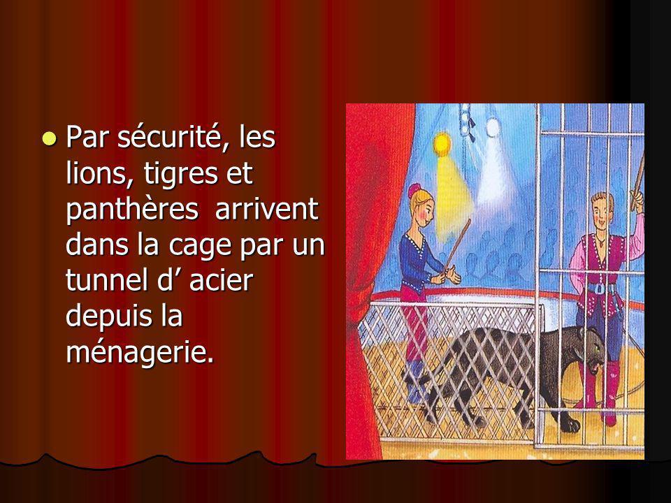 Par sécurité, les lions, tigres et panthères arrivent dans la cage par un tunnel d' acier depuis la ménagerie. Par sécurité, les lions, tigres et pant