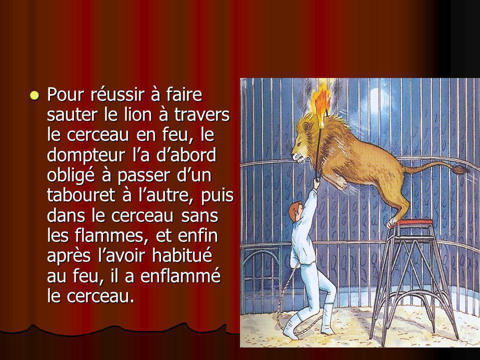 Pour réussir à faire sauter le lion à travers le cerceau en feu, le dompteur l'a d'abord obligé à passer d'un tabouret à l'autre, puis dans le cerceau