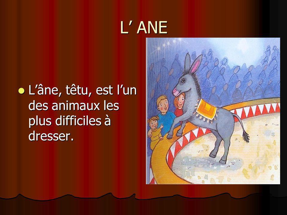 L' ANE L'âne, têtu, est l'un des animaux les plus difficiles à dresser. L'âne, têtu, est l'un des animaux les plus difficiles à dresser.
