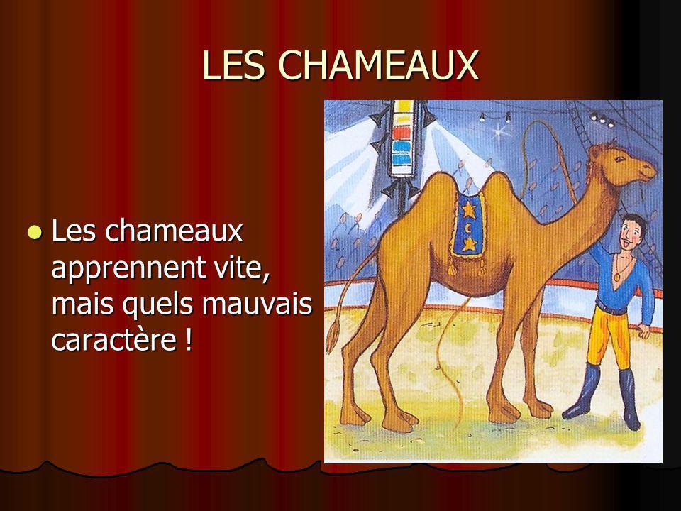 LES CHAMEAUX Les chameaux apprennent vite, mais quels mauvais caractère ! Les chameaux apprennent vite, mais quels mauvais caractère !