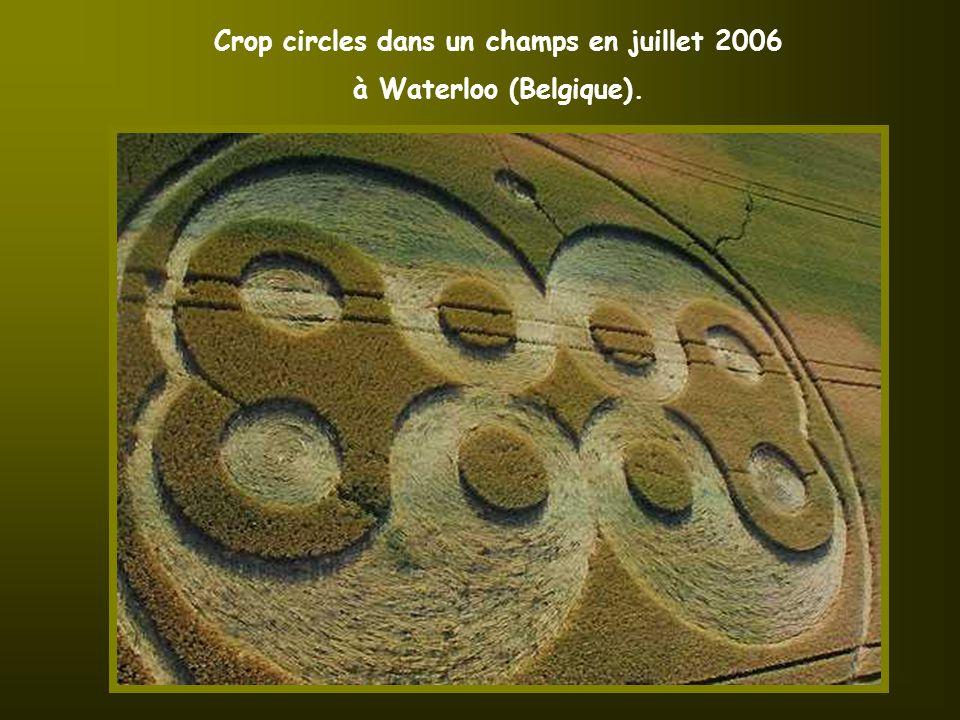 Je suis allée cette semaine à l'intérieur d'un crop circles, car dans la ville ou je demeure (Waterloo) en Belgique, trois crop circles sont apparus au mois de juillet 2006 dans des champs près du Lion de Waterloo.