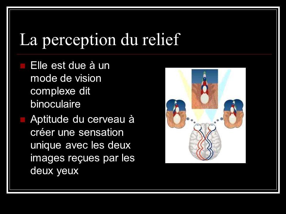 La perception du relief Elle est due à un mode de vision complexe dit binoculaire Aptitude du cerveau à créer une sensation unique avec les deux image