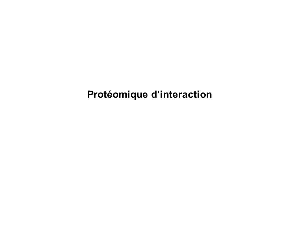 Séparation directe des complexes Séparation par chromatographie bidimensionnelle des complexes protéiques stabilisés par un agent pontant Purification et identification des peptides impliqués dans les complexes protéiques