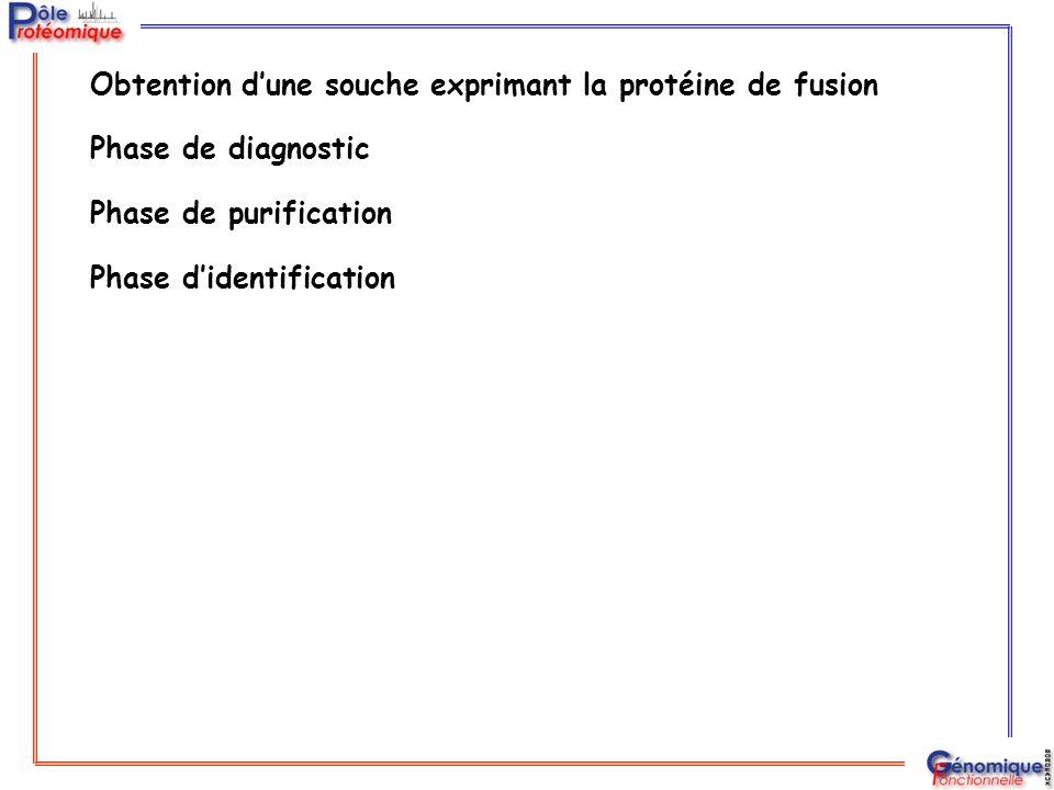 Obtention d'une souche exprimant la protéine de fusion Phase de diagnostic Phase de purification Phase d'identification