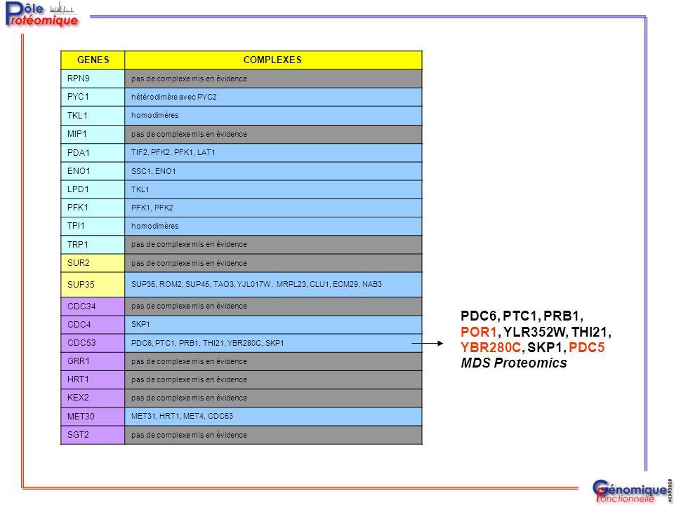GENESCOMPLEXES RPN9 pas de complexe mis en évidence PYC1 hétérodimère avec PYC2 TKL1 homodimères MIP1 pas de complexe mis en évidence PDA1 TIF2, PFK2,