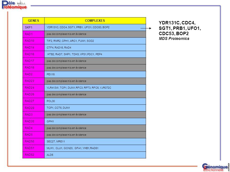 GENESCOMPLEXES SKP1 YDR131C, CDC4, SGT1, PRB1, UFO1, CDC53, BOP2 RAD1 pas de complexe mis en évidence RAD10 TIF2, RNR2, CPH1, ARC1, FUM1, SOD2 RAD14 C