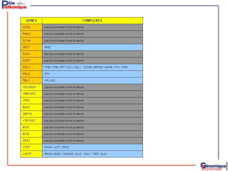 GENESCOMPLEXES NCR1 pas de complexe mis en évidence PMA1 pas de complexe mis en évidence SCH9 pas de complexe mis en évidence SET1 BRE2 SGS1 pas de co