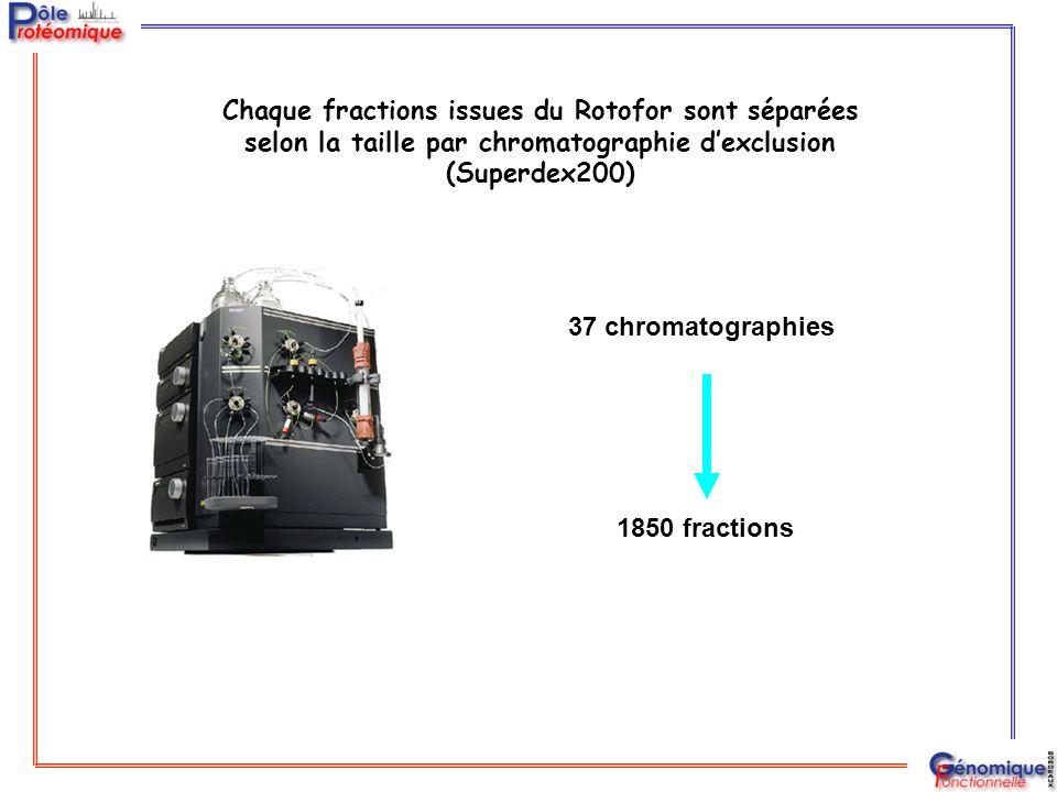 Chaque fractions issues du Rotofor sont séparées selon la taille par chromatographie d'exclusion (Superdex200) 37 chromatographies 1850 fractions