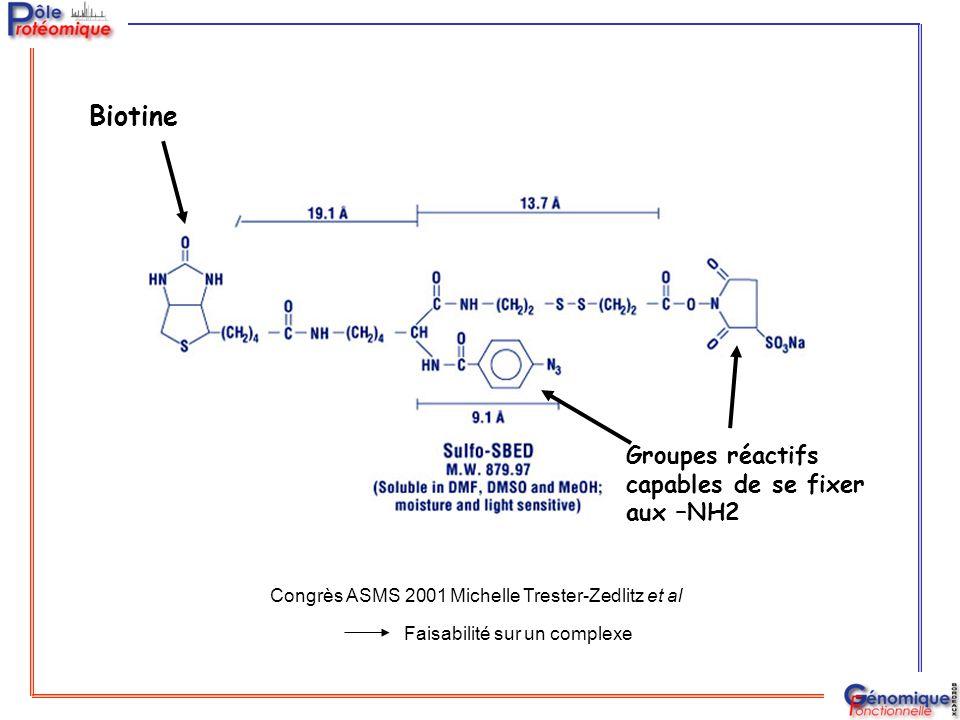 Biotine Groupes réactifs capables de se fixer aux –NH2 Congrès ASMS 2001 Michelle Trester-Zedlitz et al Faisabilité sur un complexe