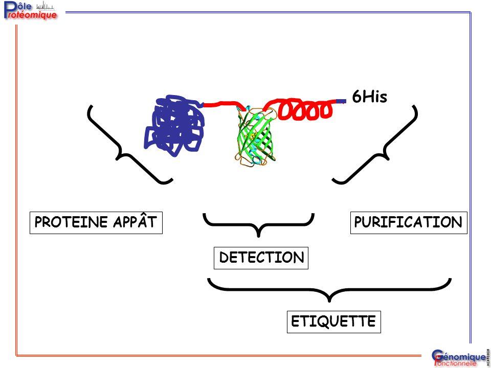 Au moins 5 méthodes de copurification: Système TAP Tag (Cellzome) Système Flag Tag (MDS Proteomics) Système CHH Tag (CSHL) Système GFP TAP Tag (Bordeaux) Système HisMyc Tag (John Yates) Appât-CBP-TEVtarget-ZZ Appât-flag tag Appât-CBP-6His-3Ha Appât-GFP-CBP-TEVtarget-6His Appât-His8-TEV target-Myc9