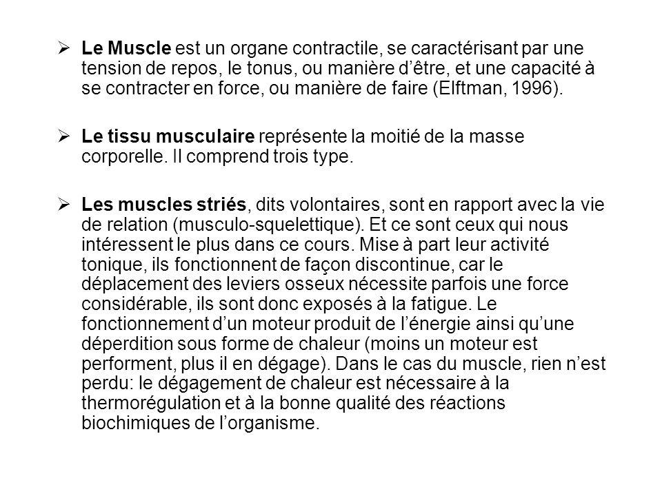  Le Muscle est un organe contractile, se caractérisant par une tension de repos, le tonus, ou manière d'être, et une capacité à se contracter en forc