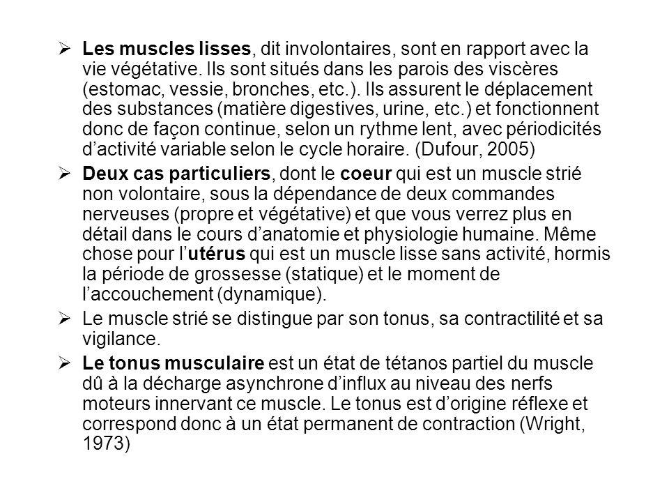  Les muscles lisses, dit involontaires, sont en rapport avec la vie végétative. Ils sont situés dans les parois des viscères (estomac, vessie, bronch