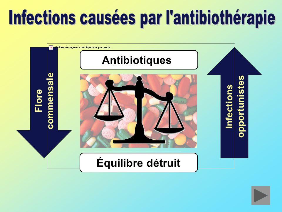 Flore commensale Infections opportunistes Antibiotiques Équilibre détruit