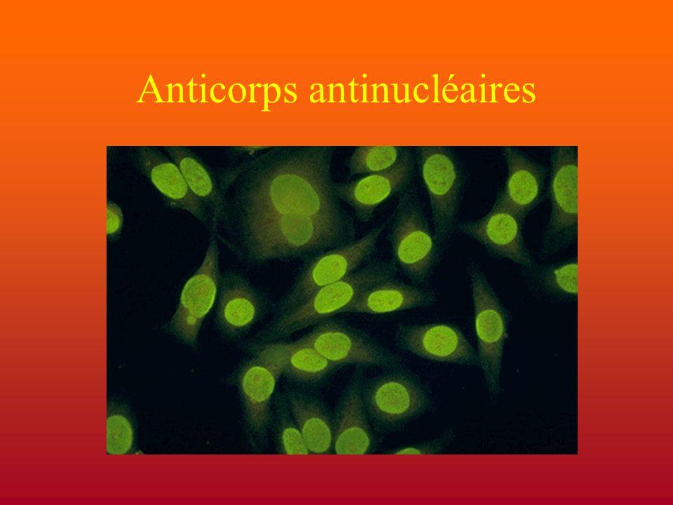 Biais de sélection positive des lymphocytes B vers la production d'anticorps possèdant une affinité pour les antigènes ubiquistes du milieu intracellulaire Sélection négative (incomplète) Séquestration des antigènes nucléaires sauf en cas d'apoptose