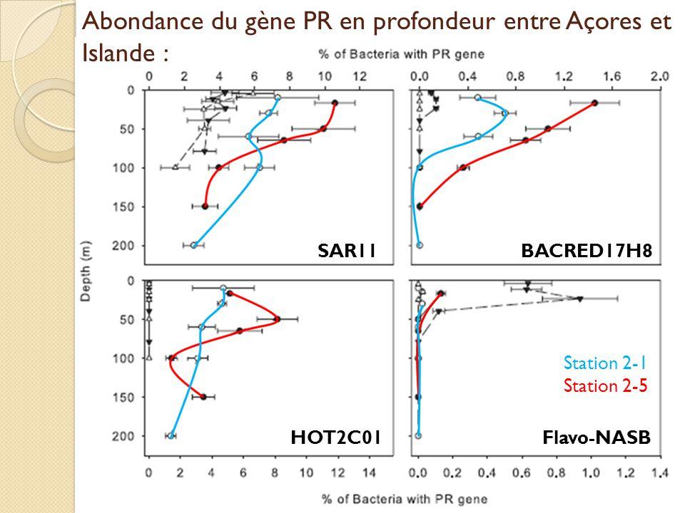 SAR11 Flavo-NASBHOT2C01 BACRED17H8 Station 2-1 Station 2-5 Abondance du gène PR en profondeur entre Açores et Islande :