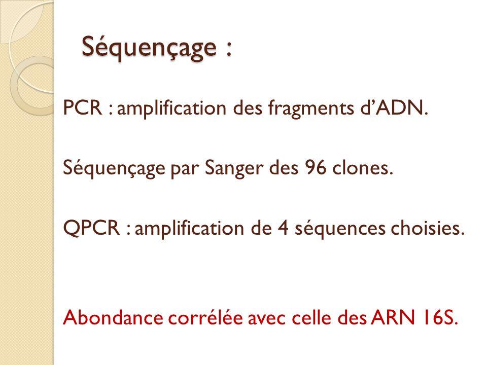 Séquençage : PCR : amplification des fragments d'ADN.