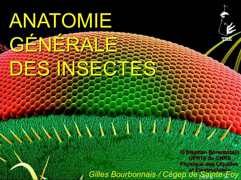 Éruciformes Scarabéiformes Campodéiformes Vermiformes (asticot) Élatériformes Corps allongé, cylindrique, sclérifié Pattes courtes Certains Coléoptères