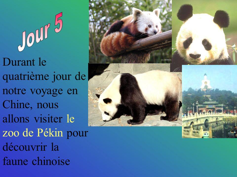 Durant le quatrième jour de notre voyage en Chine, nous allons visiter le zoo de Pékin pour découvrir la faune chinoise