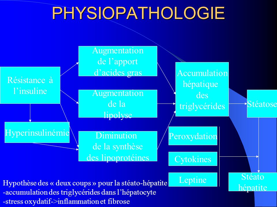 PHYSIOPATHOLOGIE Augmentation de l'apport d'acides gras Augmentation de la lipolyse Diminution de la synthèse des lipoprotéines Accumulation hépatique