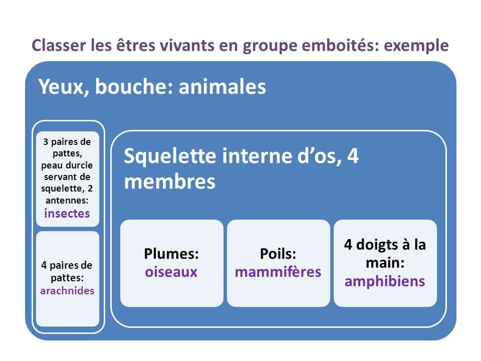 Trouver le groupe auquel appartient chacun des exemples suivants: Classer des animaux http://ile-mysterieuse.over-blog.org/110- index.html http://pagesperso- orange.fr/ava.poissons/18millepattes.ht m Carabe violot Géophile Le carabe violet possède 3 paires de pattes articulées, une peau durcie servant de squelette et 1 paire d'antennes : C'est un insecte.