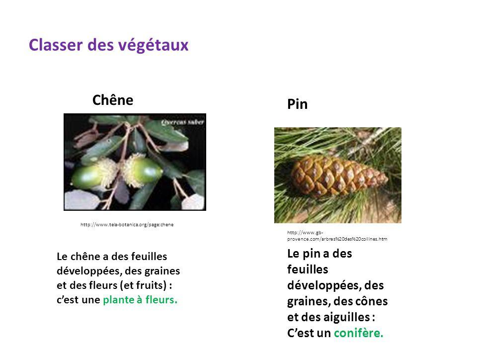 Classer des végétaux http://www.tela-botanica.org/page:chene Chêne http://www.gb- provence.com/arbres%20des%20collines.htm Pin Le chêne a des feuilles