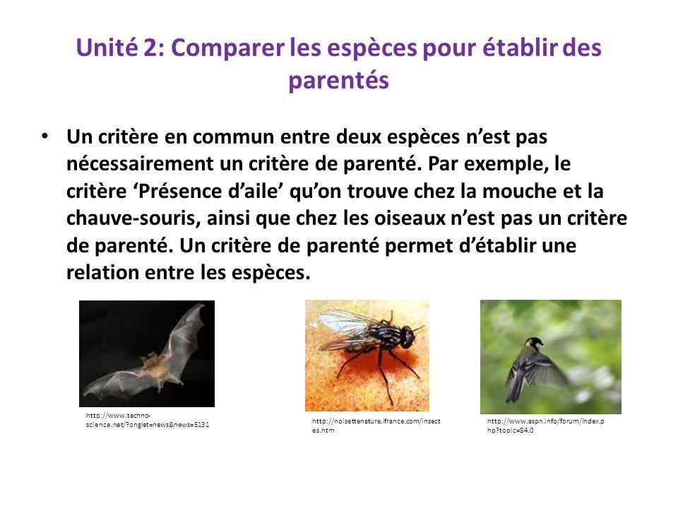 Comparer des espèces pour établir des liens de parentés Certains critères sont des critères de parentés.